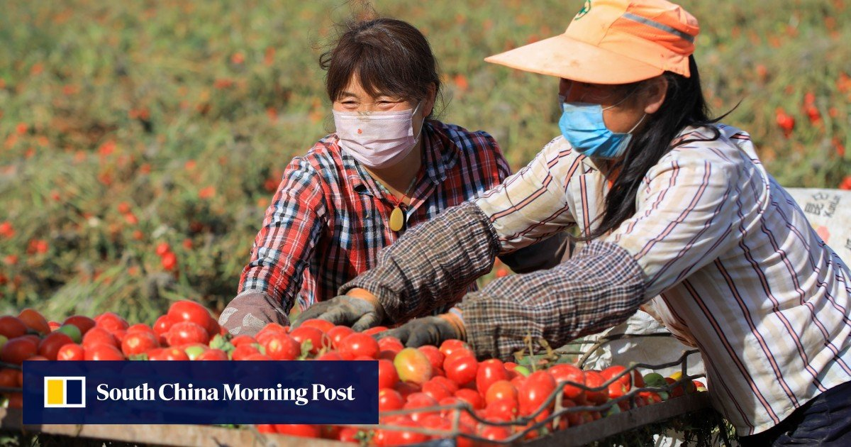 China's new five-year rural-revitalisation plan emphasises food security
