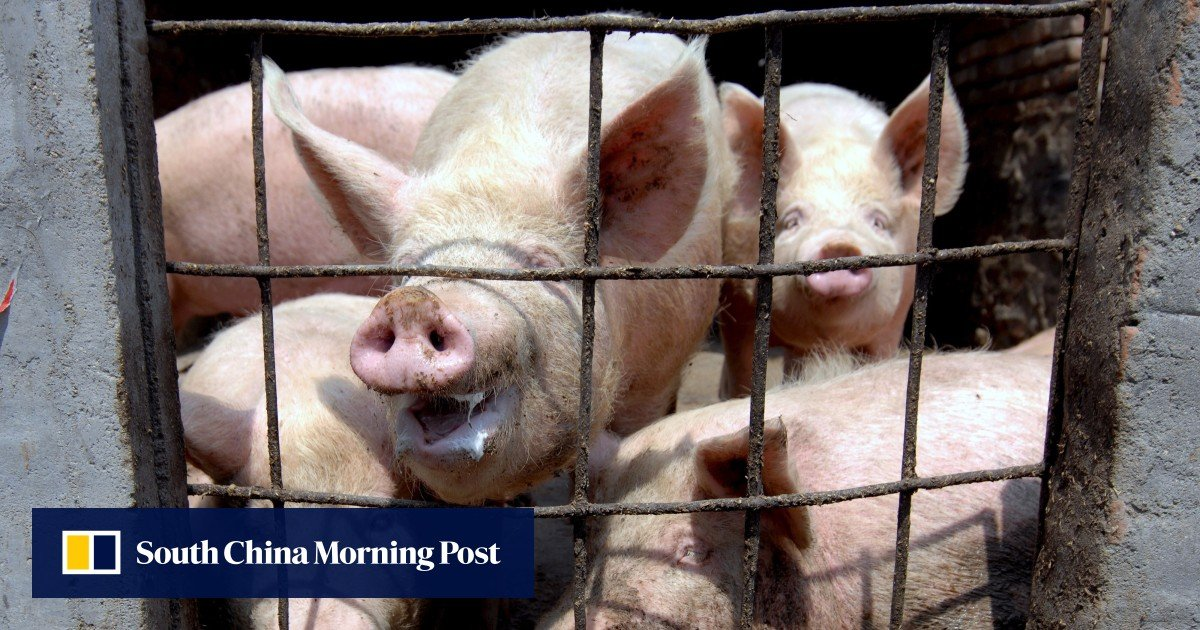 China on watch for mutant African swine fever strains