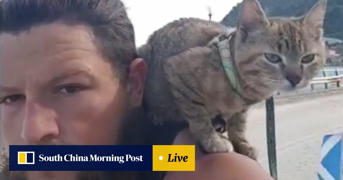 She's fearless': Man bikes around the world with stray cat named