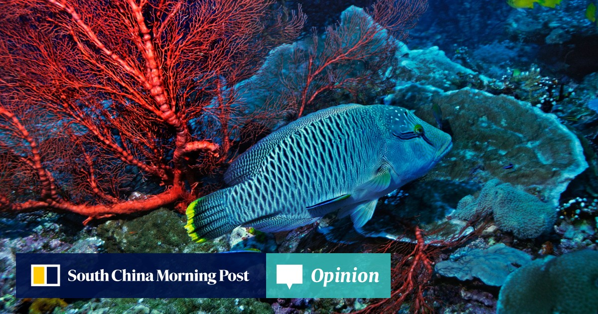 The Humphead wrasse: one of the world's most endangered