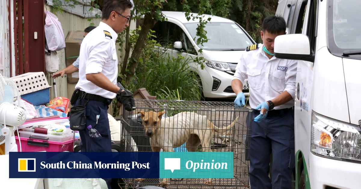 cda7821f6b4ab8 New animal welfare law must have bite | South China Morning Post