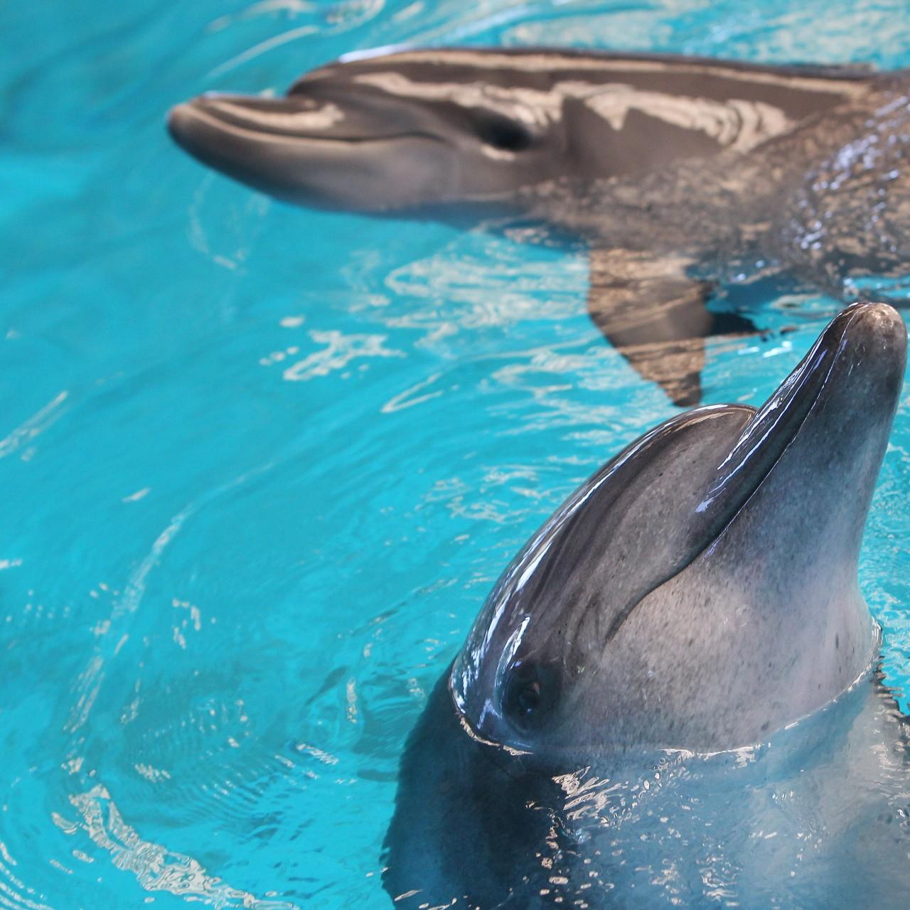 Hong Kong's Ocean Park announces HK$234 4 million deficit