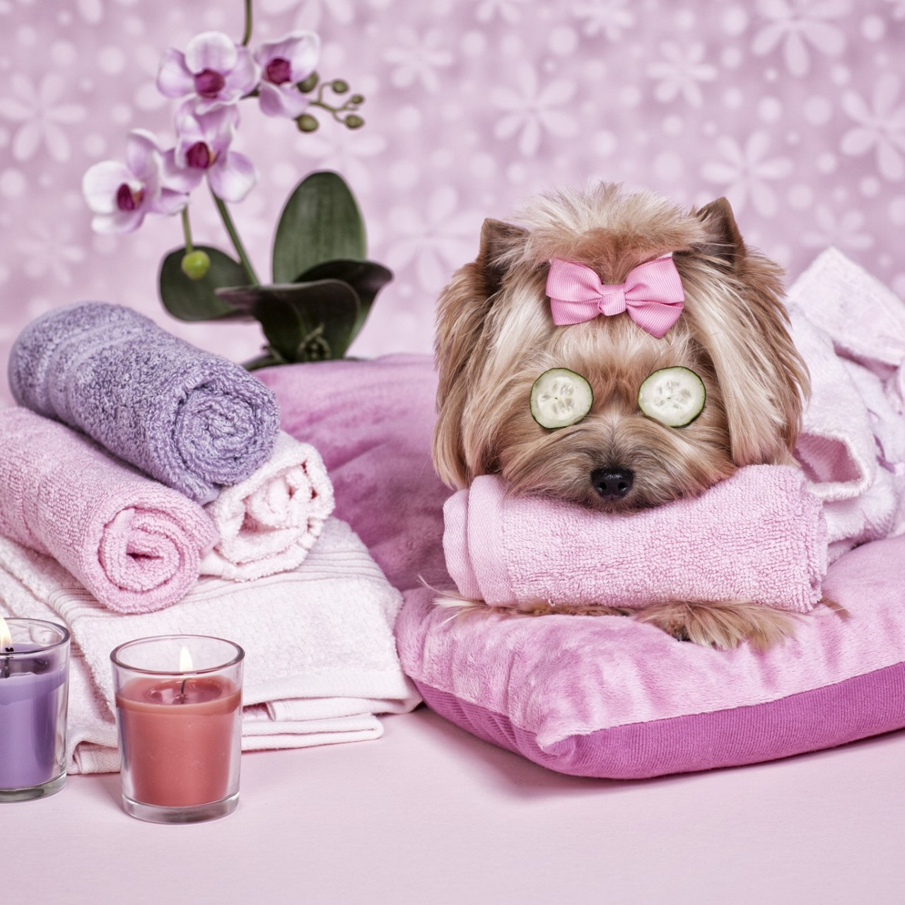 The China boom in pet markets, dog breeding and pet