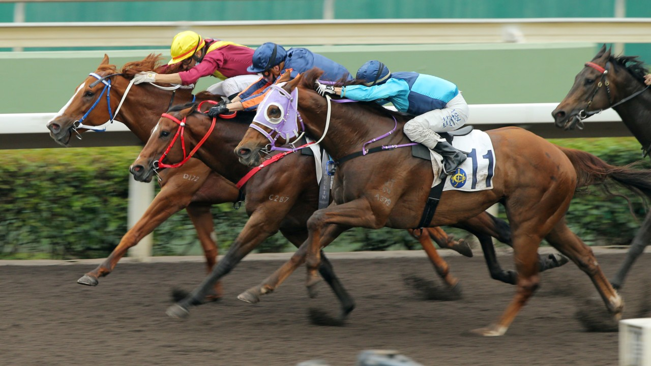 Red Desert (centre) edges out Kurpany (inside) and Sunny Boy.