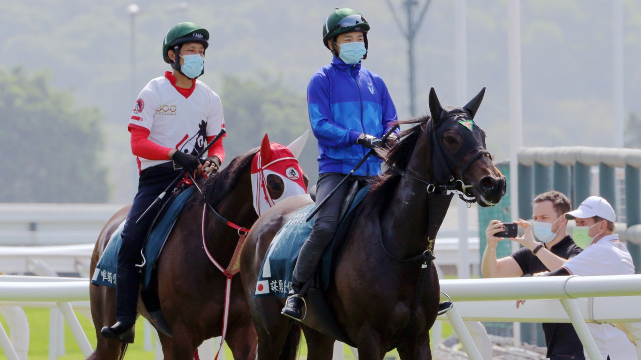 Japanese QE II Cup contenders Loves Only You (left) and Daring Tact (right) walk back to their stables after trackwork at Sha Tin. Photos: Kenneth Chan