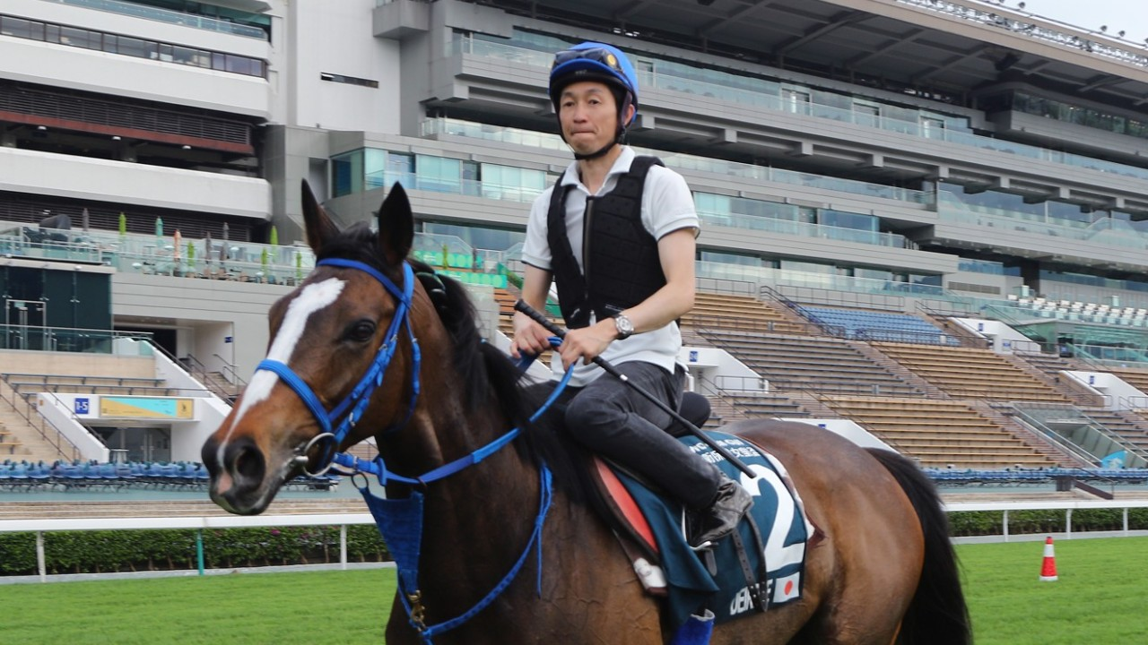 The QEII Cup runner DEIRDRE ridden by Yutaka Take and Lys Gracieux(right) going back to stable after gallop on the turf at Sha Tin racecourse. 24APR19