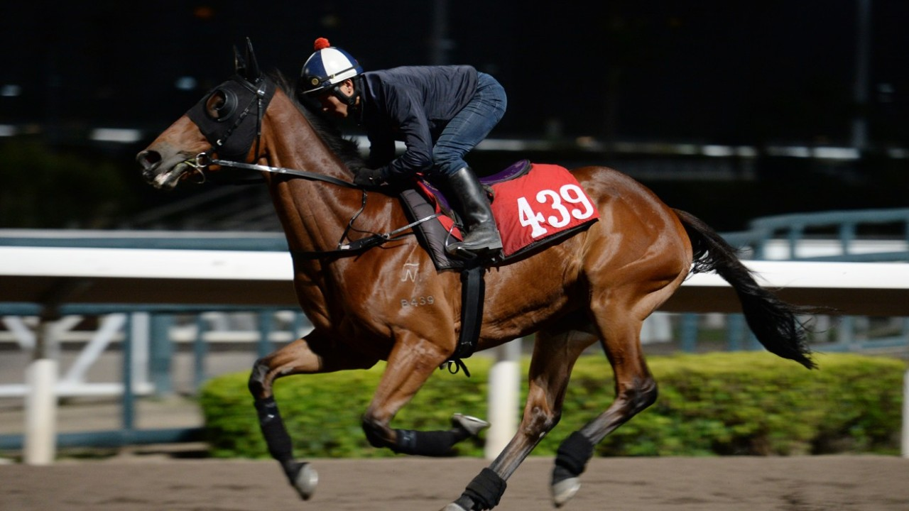 DRAGON REGIMENT ridden by Ben So Tik-hung galloping on the all weather track at Sha Tin. 01NOV18