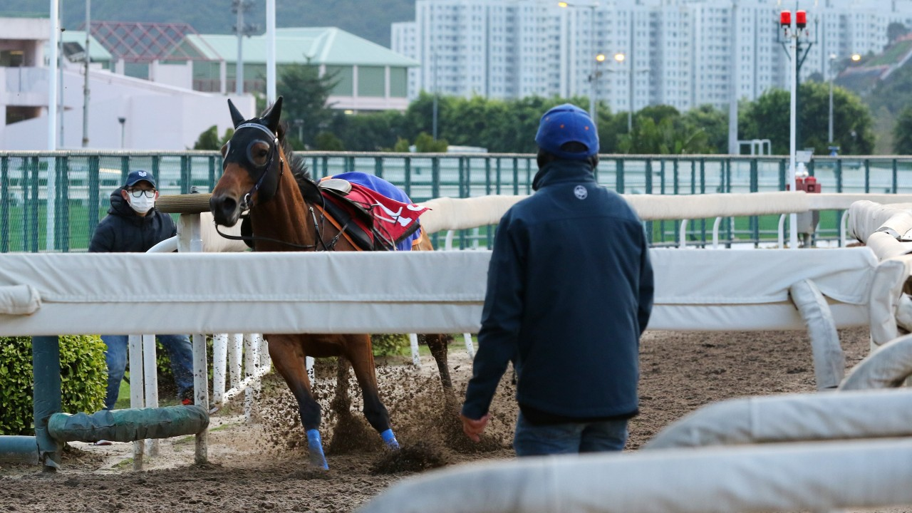 Jimmy Ting looks on as Amazing Star breaks loose after throwing Zac Purton off during track work. Photos: Kenneth Chan