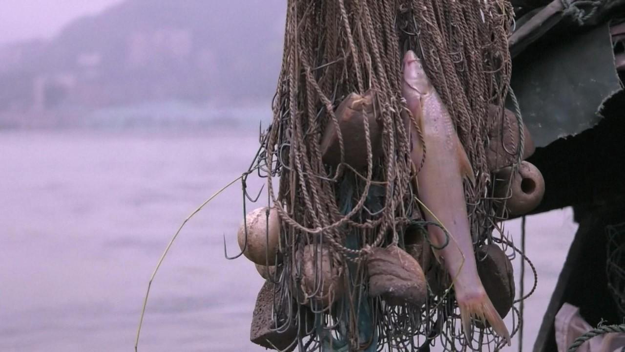 China imposes a 10-year fishing ban for Yangtze River to protect marine biodiversity